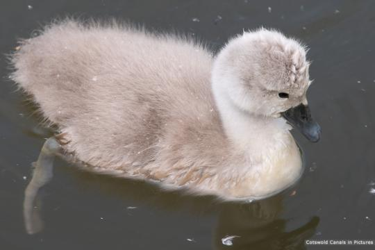 Signet on the Stroudwater